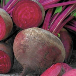"Beetroot ""Napoleon"" - early, evenly coloured variety - 250 seeds"