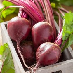 """Bio - Củ cải đường """"Quả bóng đỏ"""" - hạt hữu cơ được chứng nhận - 500 hạt - Beta vulgaris"""