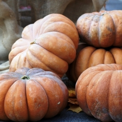 "Musk squash ""Muscade de Provence"" - with very aromatic fruit flesh - 18 seeds"
