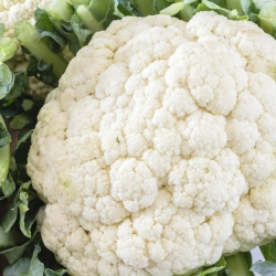 "Cauliflower ""Pioneer"" - 270 seeds"