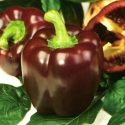 "Pepper ""Ingrid"" - dark brown variety producing large fruit"
