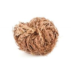 Jericho roze - liels iepakojums! - 10 gab .; Pallenis hierochuntica -