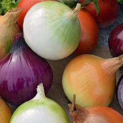 تشكيلة متنوعة من البصل - SEED TAPE - Allium cepa L. - ابذرة