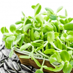 Sprouting seeds - sunflower - 100 g of seeds