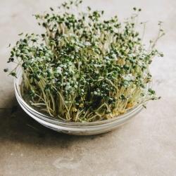 Hạt giống nảy mầm BIO - Mù tạt - Hạt giống hữu cơ được chứng nhận - Brassica juncea