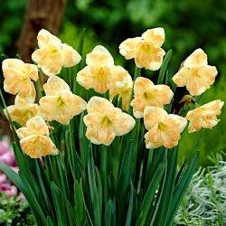 """Narcis """"Cum Laude"""" - 5 ks. -"""