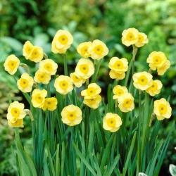 "Narcis ""Sun Disc"" - 5 ks. -"