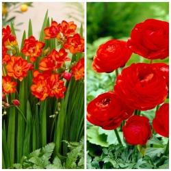 Sarkanās harmonijas sākums 2 sarkanām ziedošām augu sugām - 100 gab. -