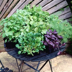 Japanese herbs selection - Far East medicine at your home