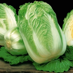 """Napa cabbage """"Optiko"""", Chinese cabbage - early, delicious variety - 65 seeds"""