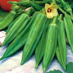 Okra seeds - Hibiscus esculentus - 30 seeds