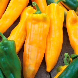 "Pepper ""Corno di Toro Giallo"" - yellow, sweet"