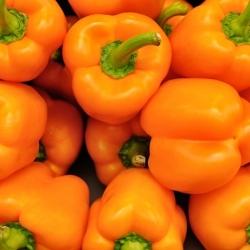"Pepper ""Revue"" - sweet - 100 seeds"