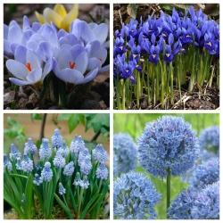 Blue Spring – set of 4 blue blooming plants - 80 pcs.