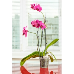 "Maceta de orquídeas transparente ""Amazone"" - ø 15 cm -"