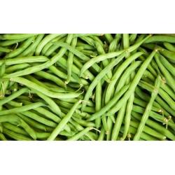 Harilik aeduba - Presto - 120 seemned - Phaseolus vulgaris L.