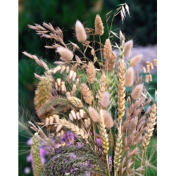 Grasses for dried bouquets mix seeds