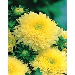 "Желтая китайская астра ""Принцесса"" - 500 семян - Callistephus chinensis - семена"