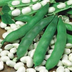 Семена фасоли - Phaseolus coccineus - семена