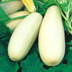 "Kostni mozeg ""Long White Bush 2"" - 14 semen - Cucurbita pepo  - semena"