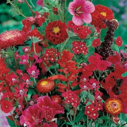 Red Plants mixed seeds