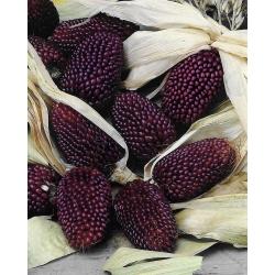 Trang trí, ngô dâu! - 39 hạt - Zea mays var. japonica Strawberry Corn