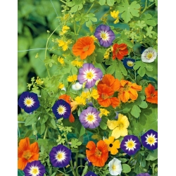 Trailing Plants mixed seeds - 15 seeds