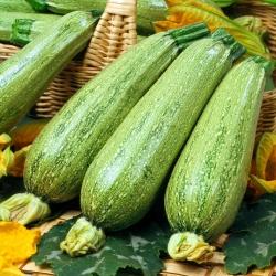 Zucchini Nimba seeds - Cucurbita pepo - 12 seeds