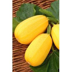 Squash Yellow Zeppelin seeds - Cucurbita pepo - 16 seeds