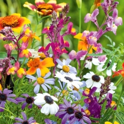 Annual Plants Last Minute Mix seeds - 70 seeds