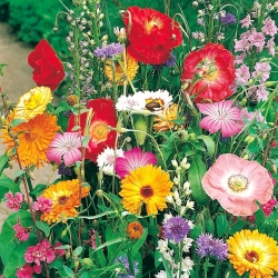Annual tall growing plants variety mix - 70 seeds