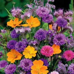 Fragrant Flowers mixed seeds - 120 seeds