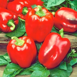 "Pepper ""California Wonder"" - red and sweet - 55 seeds"