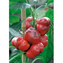 Poivron - Iga - 60 graines - Capsicum L.