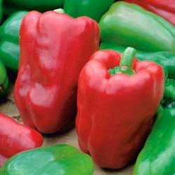 "Pepper ""Lena"" - 65 seeds"