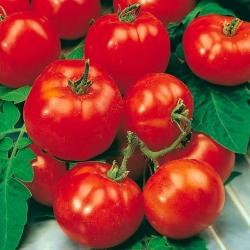 """Tomato """"Beta"""" - ideal for hobby gardeners"""