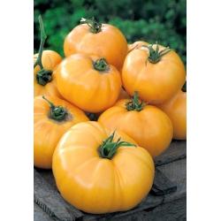 "Tomato ""Jantar"" - field variety - 150 seeds"