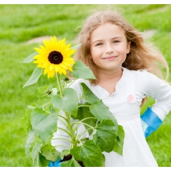 Laste mängulised päevalillid - Helianthus annuus - seemned