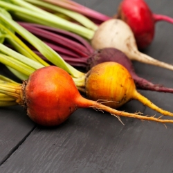 Beetroot - multicolour variety mix - COATED SEEDS - 100 seeds