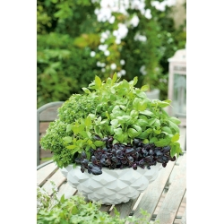 Basil variety mix - SEED DISC - 3 seeds