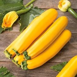 Zucchini Atena Polka seeds - Cucurbita pepo - 20 seeds