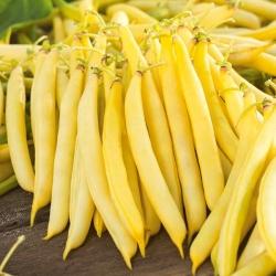 Harilik aeduba - Korona - 120 seemned - Phaseolus vulgaris L.
