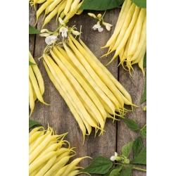 Harilik aeduba - Krakuska - Phaseolus vulgaris L. - seemned