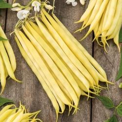 "Yellow French bean ""Krakuska"" - medium early variety"