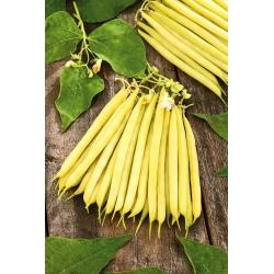 Harilik aeduba - Laurina - Phaseolus vulgaris L. - seemned