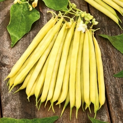 "Yellow French bean ""Laurina"" - medium-early variety"