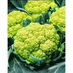Lillkapsas - Trevi F1 - Brassica oleracea L. var.botrytis L. - seemned