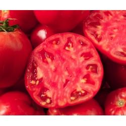 Tomat - Pink Oxheart - töödeldud seemned -  Lycopersicon esculentum