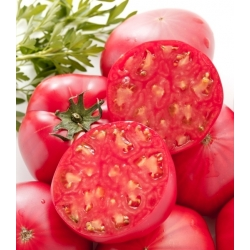Pink Oxheart Tomato seeds - Lycopersicon esculentum - 50 seeds