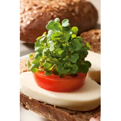Microgreens - Green kale - young leaves with exceptional taste - 900 seeds